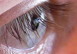 wpid-qlow-250px-n2_human_eye.jpg